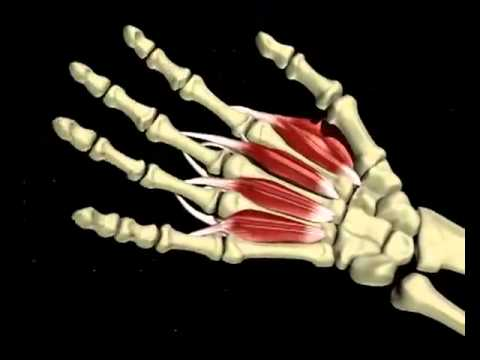 3D CGI medical video carpal tunnel syndrome   YouTube
