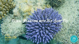 Coral Planting with Fiji Surf Co