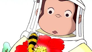 Curious George 🐵 Bee is for Bear 🐵Full Episode🐵 Kids Cartoon 🐵 Kids Movies