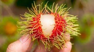 Si Pruebas Una De Estas Delicias Exóticas, Corre Y Pide Ayudar