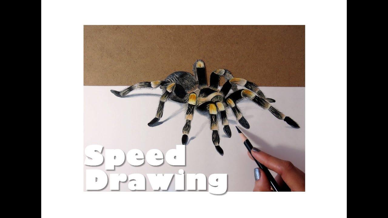 3D Spider Drawing | Realistic Illusion | Drawing a Tarantula - YouTube