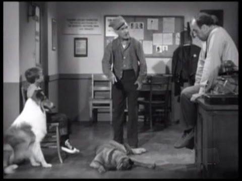 "Download Lassie - Episode #257 - ""The Bloodhound"" - Season 8 Ep. 2 - 09/17/1961"