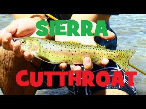 Cutthroat Trout Fishing 101 Eastern Sierra