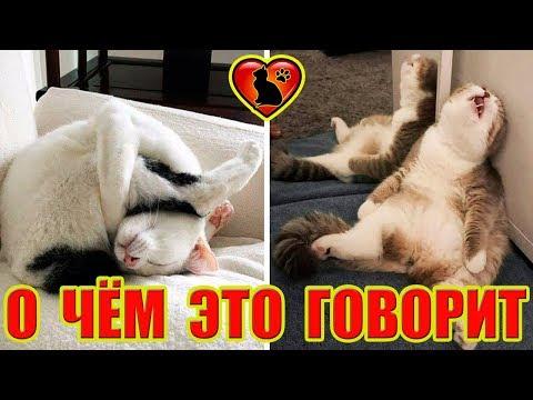 О чем говорит поза, в которой спит ваша кошка?!