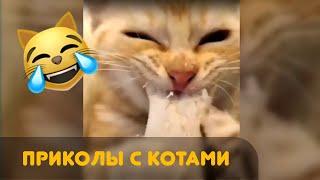 Приколы C котами 2020 😹  ржака угар прикол ПРИКОЛЮХА 😅