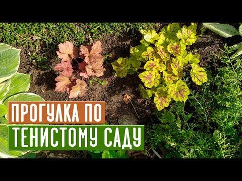 Лучшие растения для тени 💥 Прогулка по моему саду / Садовый гид