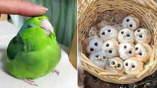 Baby Animals  Funny Parrots and Cute Birds Compilation (2021) Loros Adorables Recopilación #35