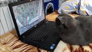 Кошке нравится смотреть видео .