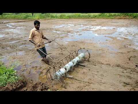 Black Rice Paddy sowing at Kasturi organic farm