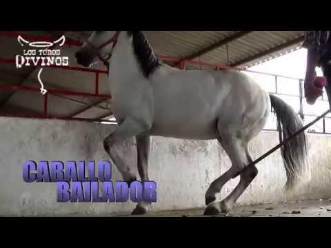 ´´CABALLO BAILADOR'' EN RANCHO LOS LAURELES 2015