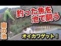 【庭の池】釣った魚を池で飼う オイカワゲット! #40 2017.10.23