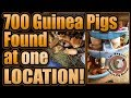 700 Guinea Pigs Discovered at one Location!