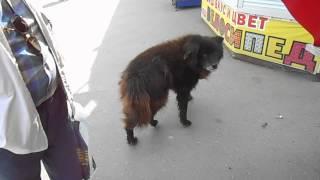 Странная собака в Вологде ч.3