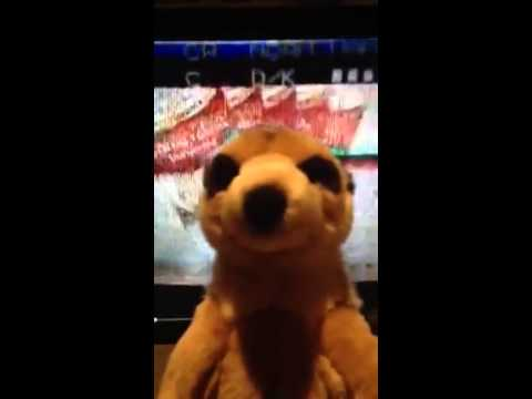 Compare the Gyms - Meerkat