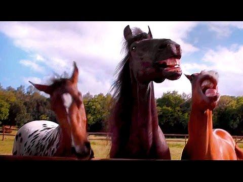 ¿Los caballos se rien?...
