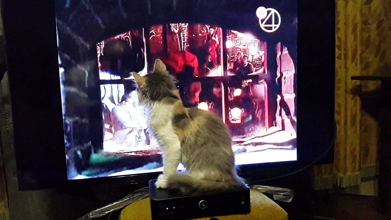Кошка смотрит Камеди клаб.)) Котёнок Пуша смотрит телевизор.