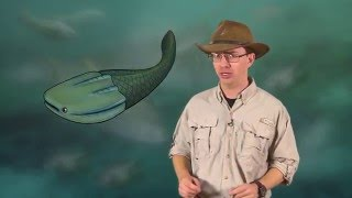 Paleo 103: Early Vertebrate Evolution