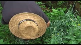 Sacar la planta del semillero