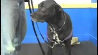Reward Training Intro - Sirius Adult Dog Training