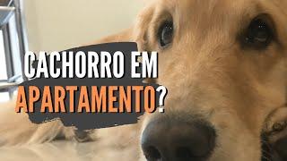 Cão de grande porte em apartamento