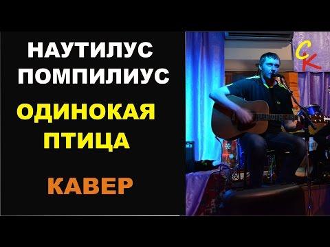 Наутилус Помпилиус - ОДИНОКАЯ ПТИЦА (кавер - Константин Сапрыкин)