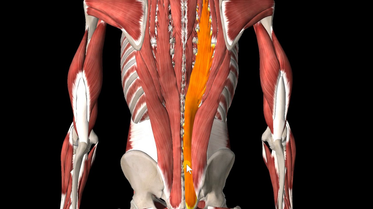 Anatomy of lower back pain