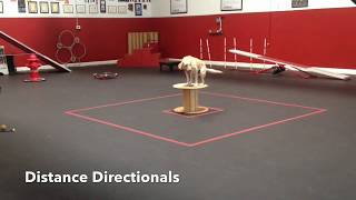 Dog Training Challenge: Distance Directionals