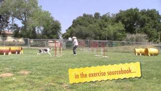 Tunnel Fun With Twix: Positive Reinforcement Dog Agility Training