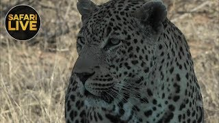 safariLIVE - Sunrise Safari - November 5, 2018