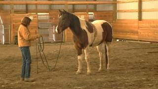 Preparing for the Saddle - Starting a Horse Under Saddle with Chief Ep. 5