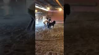 Allfails  two guys try to get on small mini horse get kicked in balls