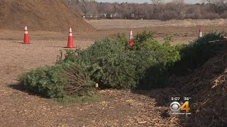Christmas Tree Recycling Locations And Information