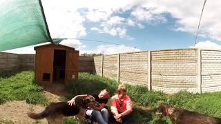 Korabiewice - pieski do adopcji / 360°
