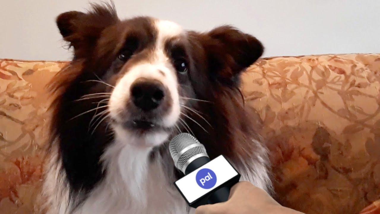 Pet Interviews - Christmas