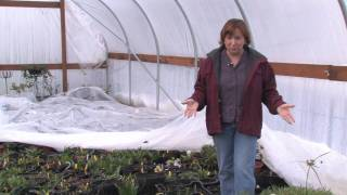 Gardening Lessons : How to Grow Flowers in a Greenhouse