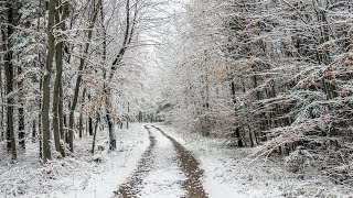 Winter forest walk [3d binaural audio]