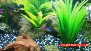 insight interpet led 64l aquarium