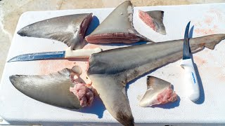 REAL SHARK FIN Soup From Scratch! Clean and Cook (Blacktip Shark)