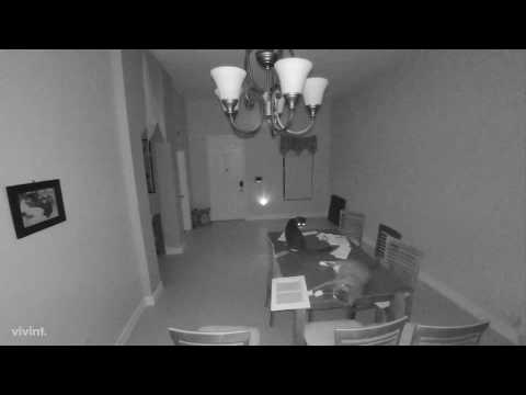 Randi West - Cat sets off alarm by knocking something off table