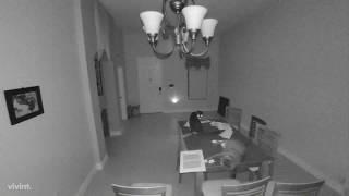 深夜のリビングルームで突然警報アラームが鳴り響いた。現場には容疑猫3匹。一体何が起きたのか?
