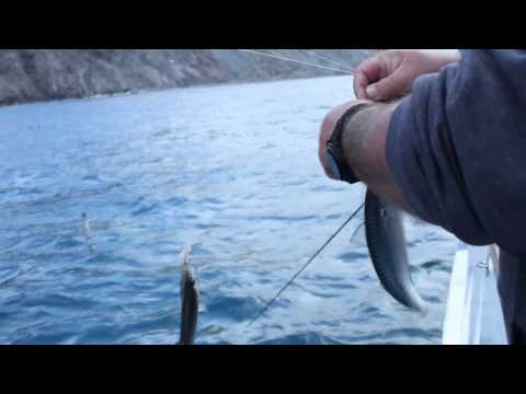 San Clemente Island Draw-in