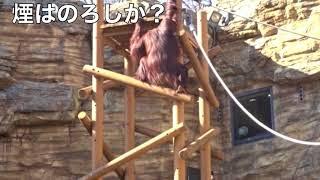 小林克也 & ザ・ナンバーワン・バンド / LET'S MAKE LOVE ~REGGAE ONDO~.ver2