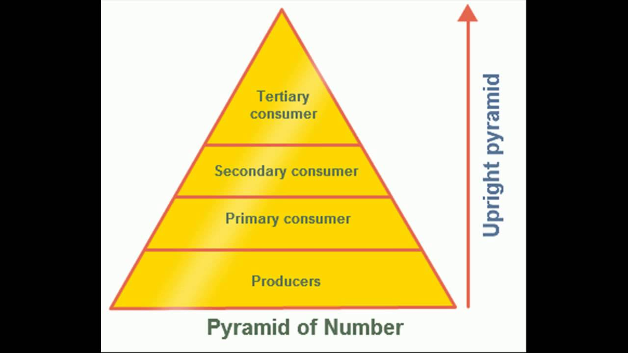 Pyramid of Numbers - YouTube