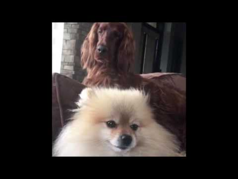 Dale Earnhardt Jr. Posted This Video Of His Dogs That We Certainly Didn't Add Human Voices To