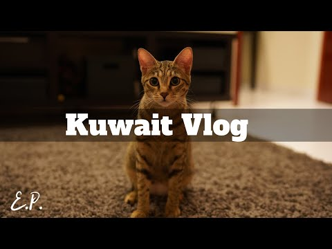 TRAVEL VLOG | Kuwait #7 Cats, camels, money, and other discoveries