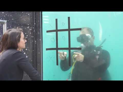 Tic Tac Toe with Navy Divers in Times Square, NYC