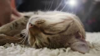 Котейки для расслабления #1 | Purring Cat