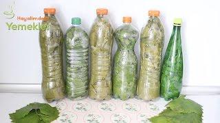 Tuzsuz ve Susuz Üzüm Yaprağı Nasıl Saklanır /Pet Şişede Kuru Asma Yaprağı Saklama
