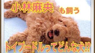 ペットで犬を飼おうと迷っている方へ〜トイプードル〜 世の中には様々な...