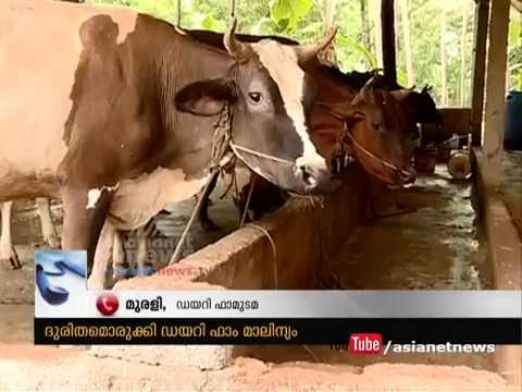 Dairy farm in Mavoor makes serious waste Problems in village